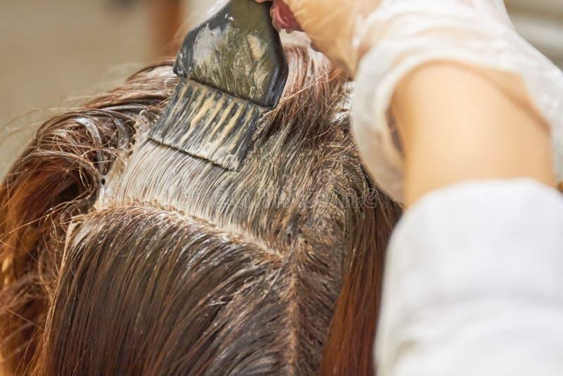 Szczotkarski stosuje barwidło na włosy fotografia stock