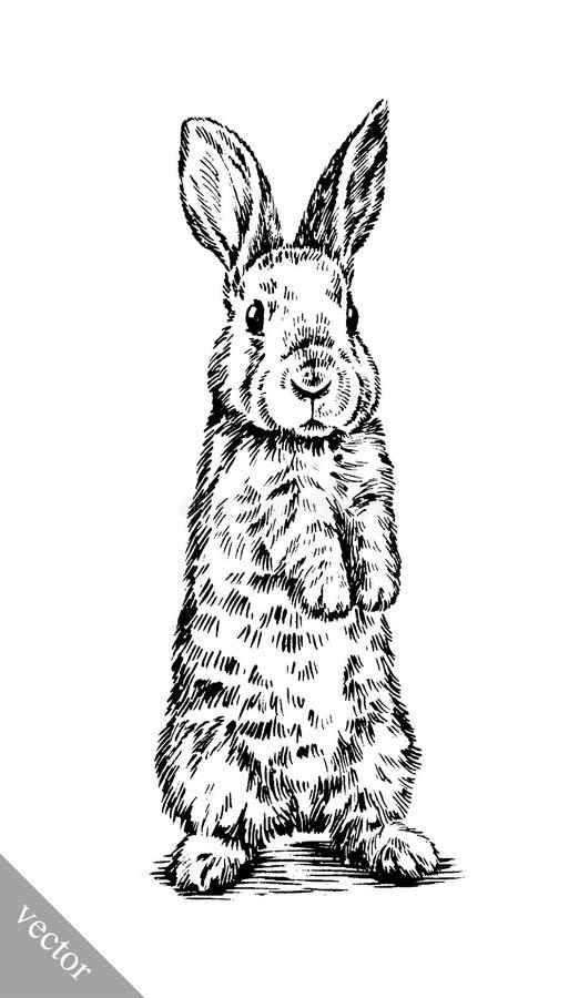 Szczotkarskiego obrazu atramentu remisu królika odosobniona ilustracja ilustracji