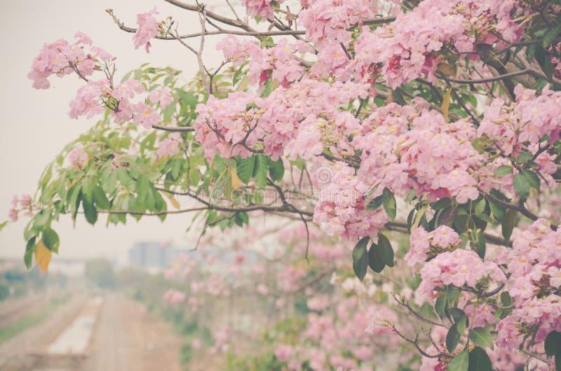 szczytowy kwiat obraz stock
