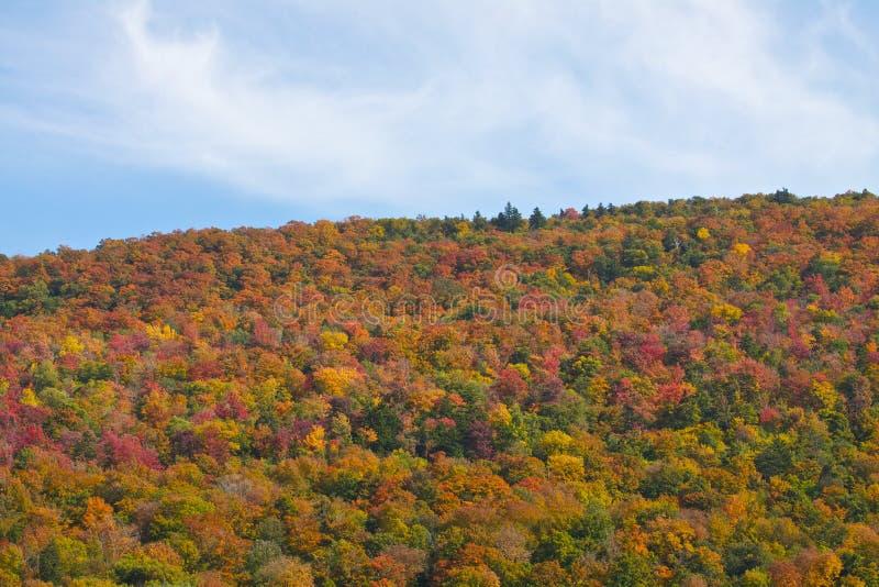 Szczytowy ulistnienie w Vermont obrazy royalty free