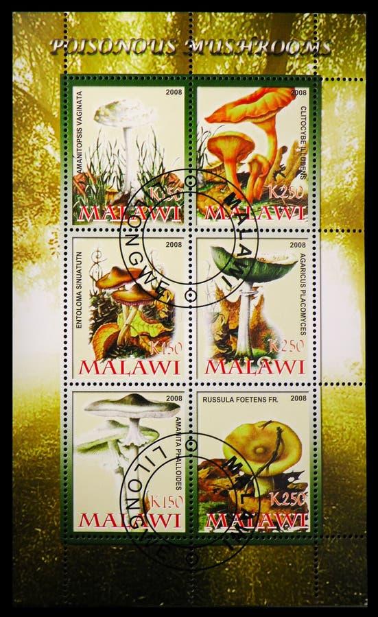 Sześć znaczków pocztowych drukujących w Malawi od Jadowitego pieczarki seria około 2008, ilustracja wektor