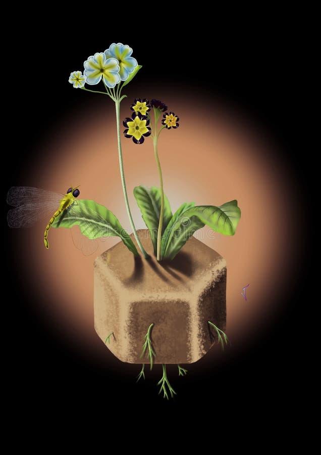SZEŚCIOKĄTA kwiat obraz royalty free