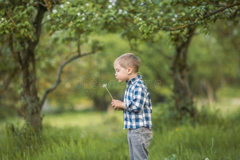 Sześcioletnia chłopiec w brzoza lesie w pełnym przyroscie w wiośnie dziecko li?e wielkiego lizaka zdjęcia stock