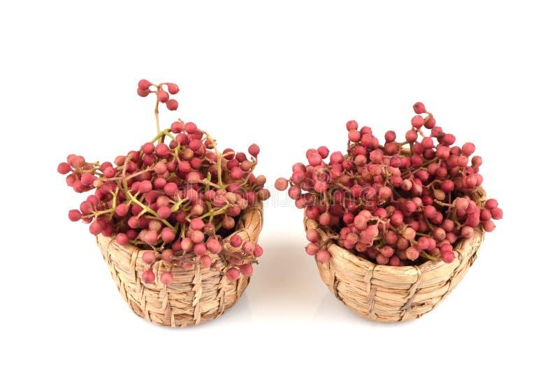 Szechuan peppar, Sichuan peppar, anispeppar, kinesisk peppar, japansk peppar: frukter arkivbilder