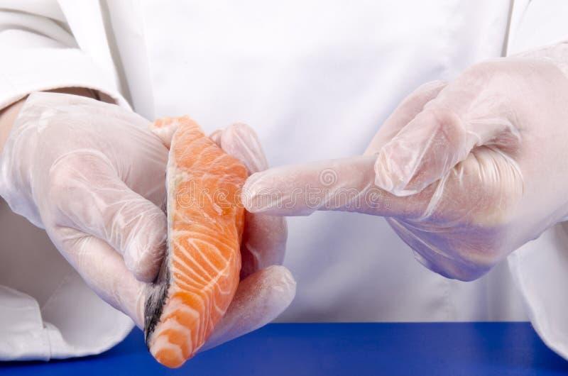 szef kuchni żeńskiego fileta świezi łososia przedstawienie zdjęcia royalty free