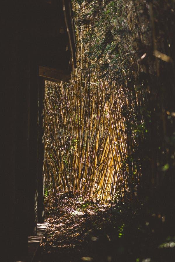 Szene des Bambus- und Sonnengrellen glanzes stockfoto
