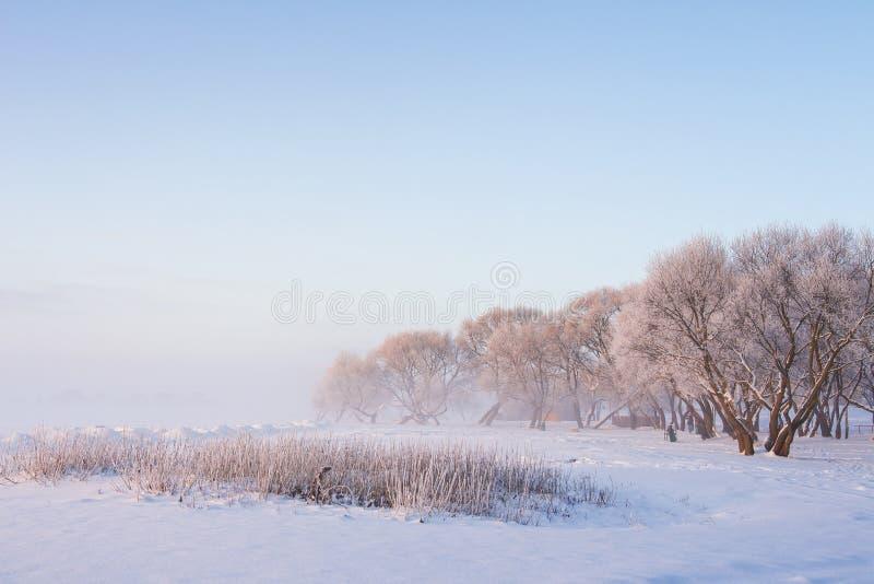 Szene des verschneiten Winters morgens Eisige Bäume auf eisiger weißer Wiese auf klarem nebelhaftem Morgen Russland, UralJanuary, lizenzfreies stockbild