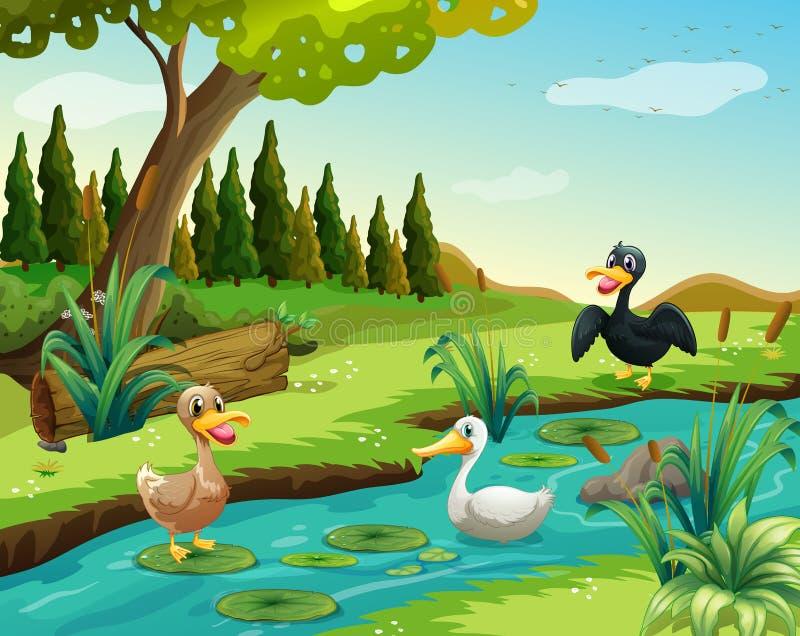 Szene mit drei Enten durch den Teich lizenzfreie abbildung