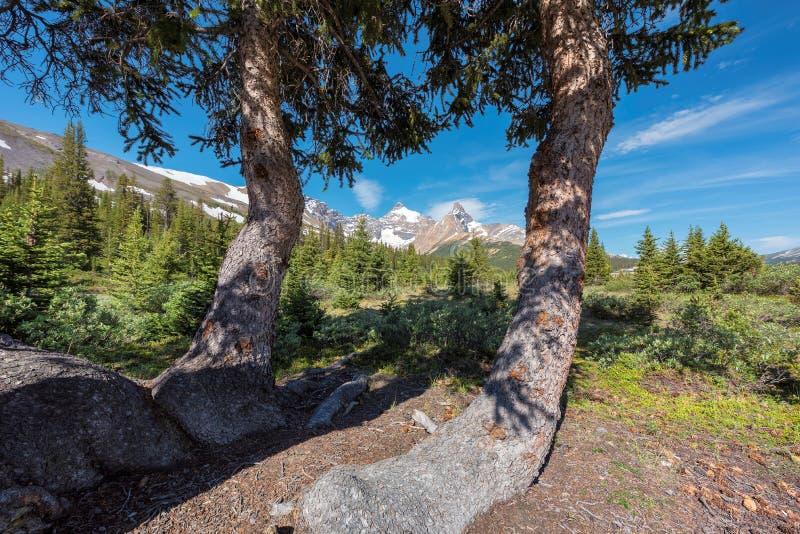 Szenische Ansicht über Kanadier Rocky Mountains in Nationalpark Banffs, Alberta Canada stockfoto