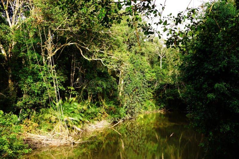 Szenische Ansicht über kleinen Fluss in einer üppigen, verbotenen Umwelt/in einem ruhigen Fluss, der in einen üppigen Sommerwald  lizenzfreie stockbilder