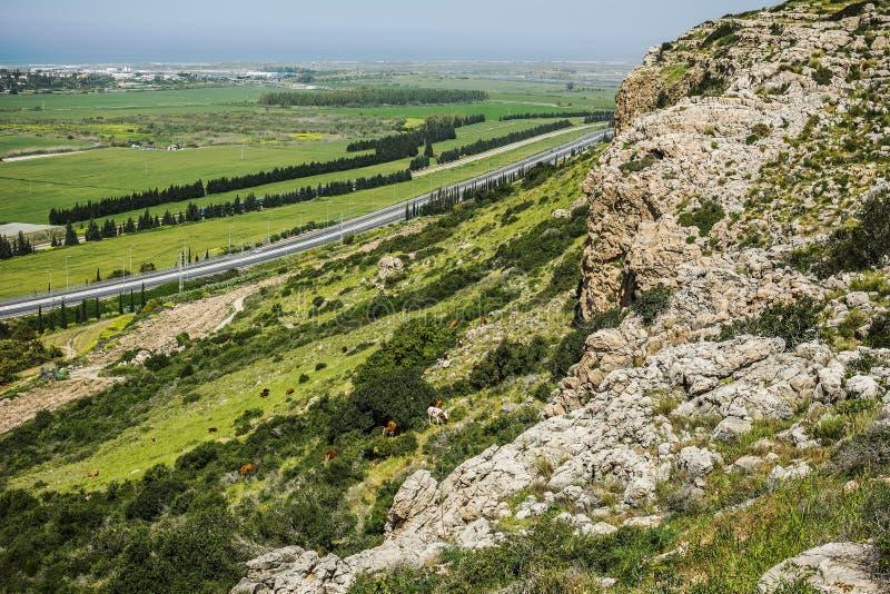 Szenische Ansicht der Gebirgsklippe von Grünfeldern und -kühen auf Hügel herein I lizenzfreie stockbilder