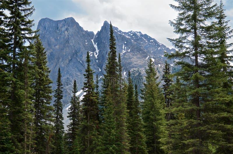 Szenische Ansicht des Kanadier-Rocky Mountains-Gebirgszugs mit schönen grünen hohen Fichten im Vordergrund, Yoho National Park, stockbild