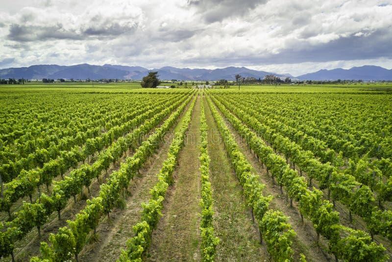 Szenische Ansicht des Marlborough-Weinbestimmungsortes in Neuseeland lizenzfreies stockbild