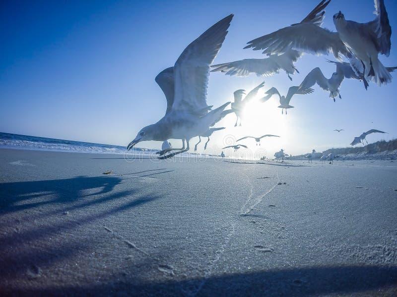 Szenische Ansichten am Eicheninselstrand Nord-Carolina stockfotografie
