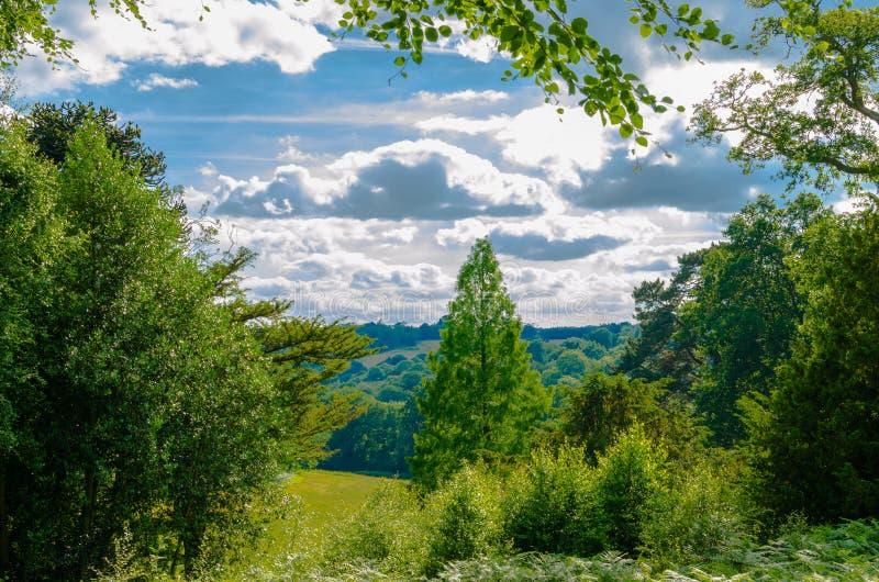 Szenische botanische Gärten und Holz unter hellen Sommerwolken stockbilder