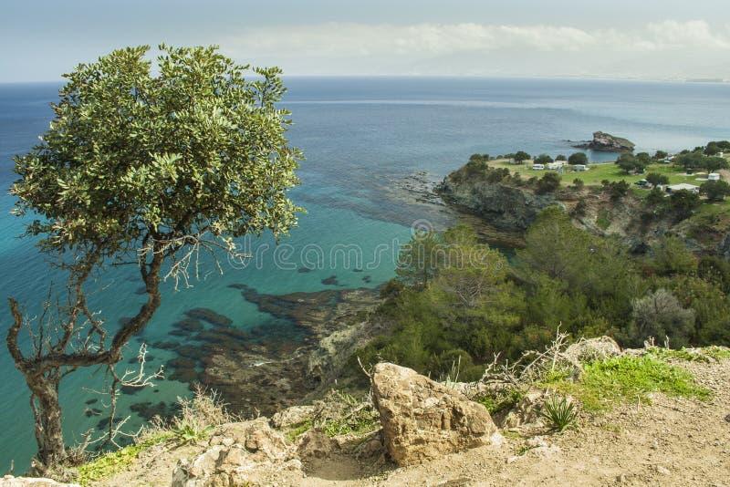 Szenische Küstenlandschaft an Akamas-Halbinsel von Zypern lizenzfreies stockbild