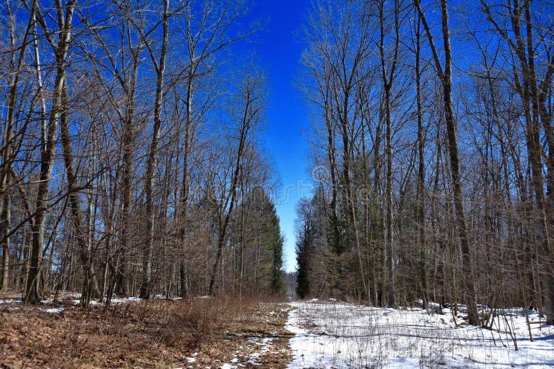 Szenische Landschaft des Abstandes im Wald auf einer Erdgasleitung stockbilder