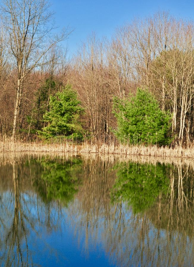 Szenische Landschaft des Holzes eines Winters reflektierte sich in einem Teich lizenzfreie stockfotografie