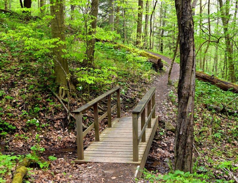Szenische Landschaft einer Holzbrücke auf einer Waldbahn lizenzfreie stockfotografie