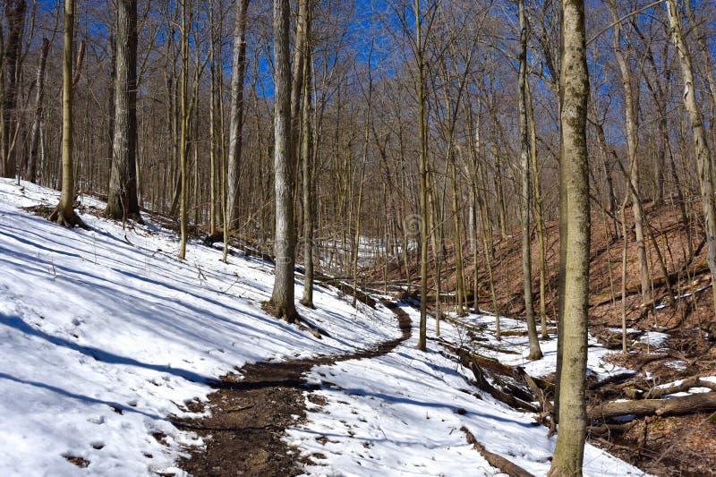 Szenische Landschaft eines Waldwanderwegs im Winter stockfotografie