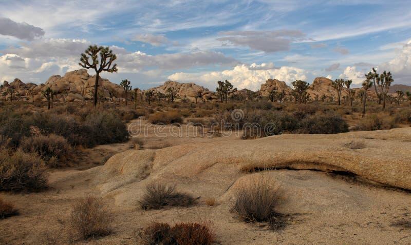 Szenische Landschaft, Joshua Tree National Park, Kalifornien stockfoto