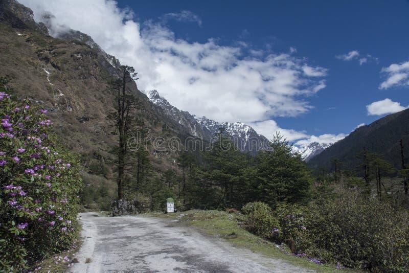 Szenische Landschaft am Shingba-Rhododendron-Schongebiet nahe Yumthang-Tal, Sikkim, Indien lizenzfreie stockfotos