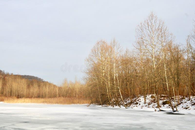 Szenische Landschaft von einem gefrorenen See und von Wald im Winter lizenzfreie stockfotografie