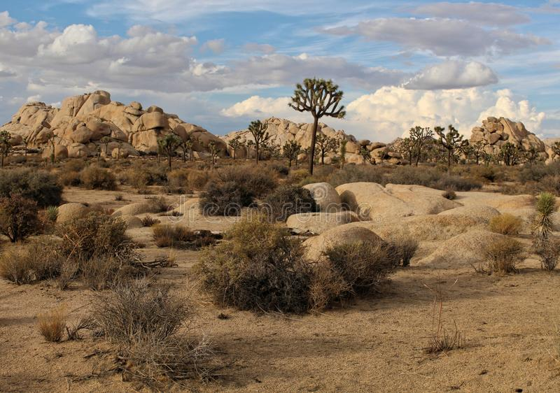 Szenische Landschaft von Joshua Tree National Park, Kalifornien stockfotos