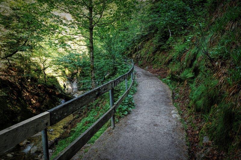 Szenische Landschaftslandschaft im Schwarzwald: durch grünen Wald mit erstaunlichen Ansichten im Frühjahr wandern nahe stockbilder