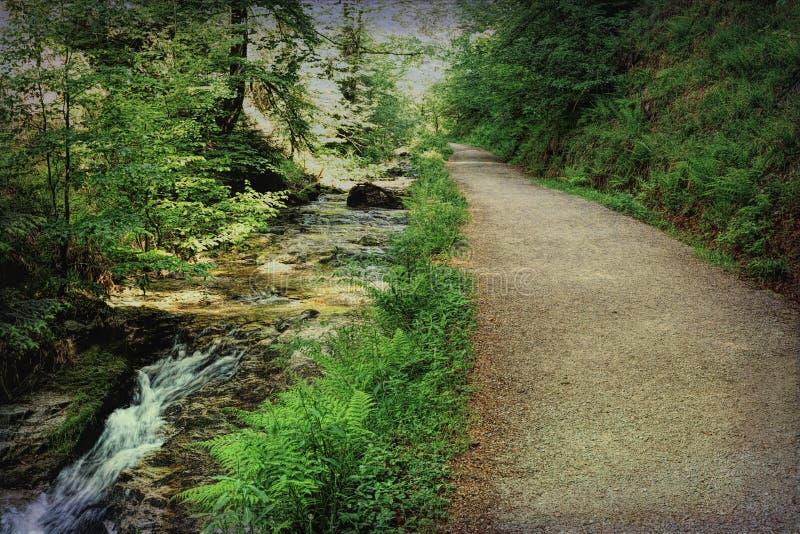 Szenische Landschaftslandschaft im Schwarzwald: durch grünen Wald mit erstaunlichen Ansichten im Frühjahr wandern nahe stockfoto