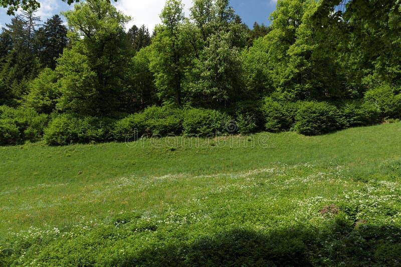 Szenische Landschaftslandschaft im Schwarzwald: durch grünen Wald mit erstaunlichen Ansichten im Frühjahr wandern nahe stockfotos