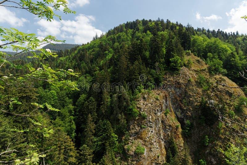 Szenische Landschaftslandschaft im Schwarzwald: durch grünen Wald mit erstaunlichen Ansichten im Frühjahr wandern nahe stockfotografie