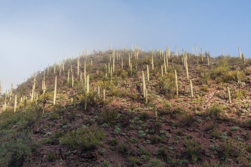 Szenische Saguaro-Nationalpark-Landschaft lizenzfreie stockfotografie
