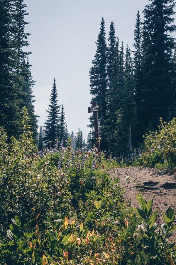 Szenische Sommer-Wanderung Kootnenay stockbild
