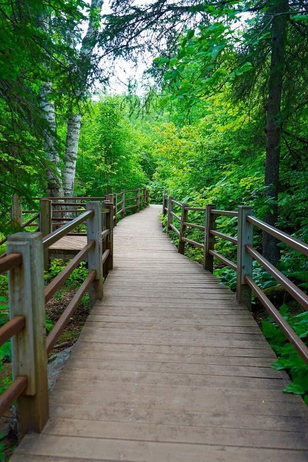 Szenischer bewaldeter Wanderweg entlang dem Stachelbeerfluß in Minnesota stockfotografie