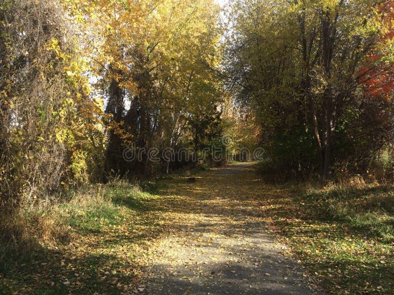 Szenischer Fallweg am Park stockbild
