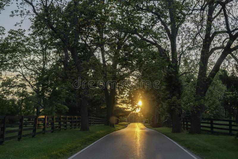 Szenischer Kentucky-Seitenweg nahe Lexington stockfotos