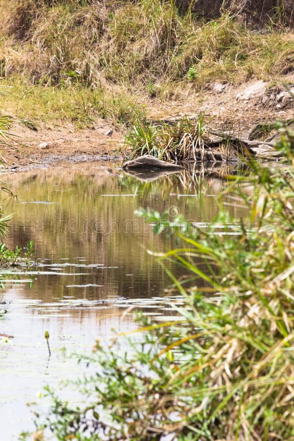 Szenischer See auf Masai Mara, Kenia lizenzfreie stockbilder