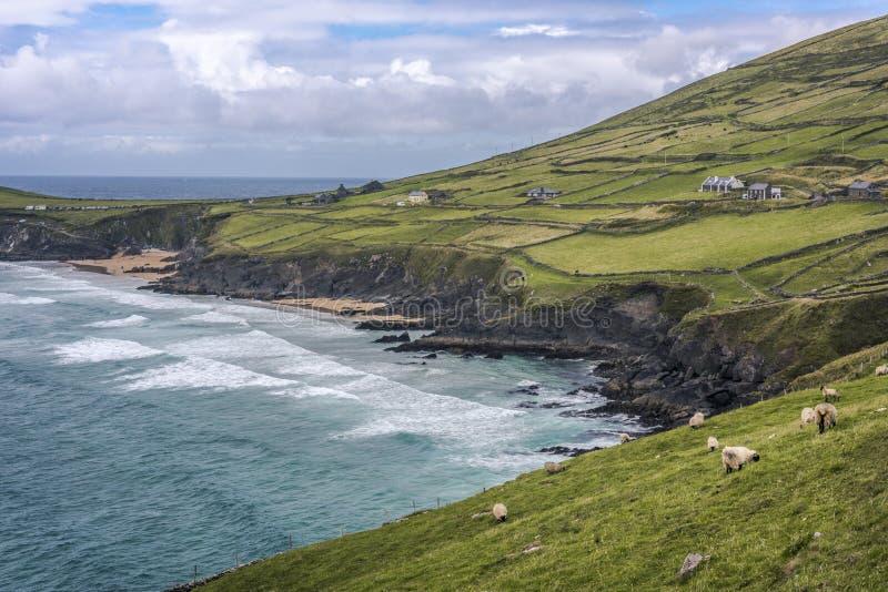Szenischer Strand und ländliche Landschaft an Slea-Kopf, Dingle-Halbinsel, Grafschaft Kerry, Irland stockbild