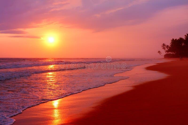 Szenischer tropischer Strand mit Palmen am Sonnenunterganghintergrund, Sri Lanka stockbild