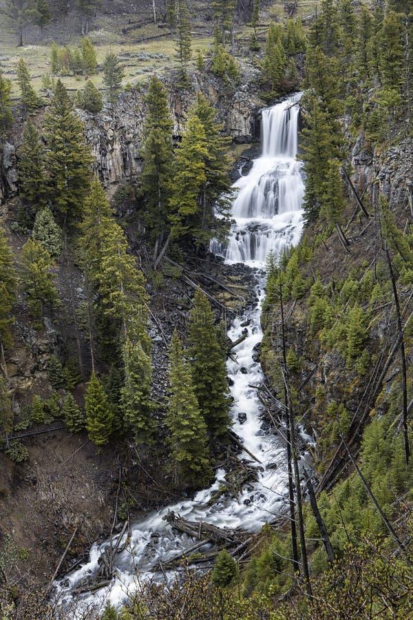 Szenischer Undine Falls in Yellowstone lizenzfreie stockbilder