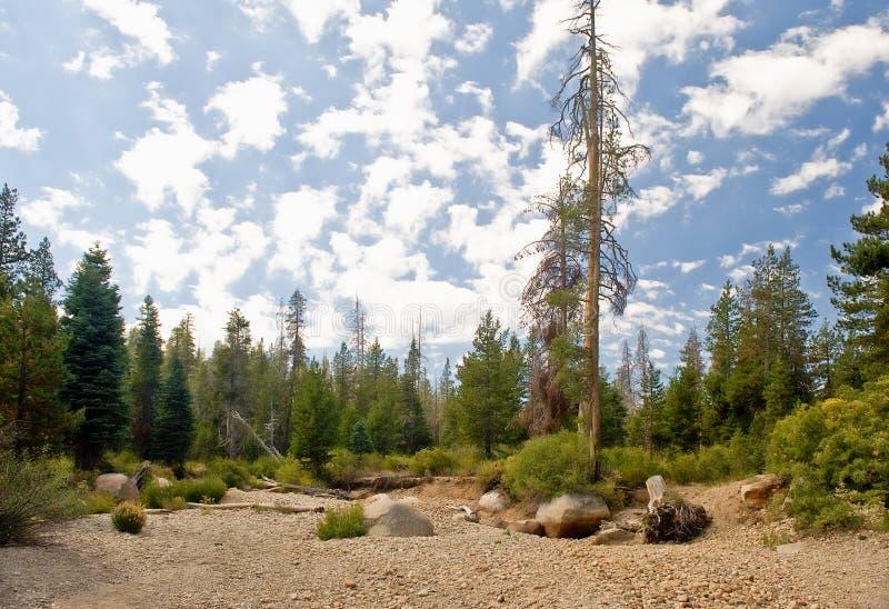 Szenischer Wald Nevada lizenzfreie stockbilder