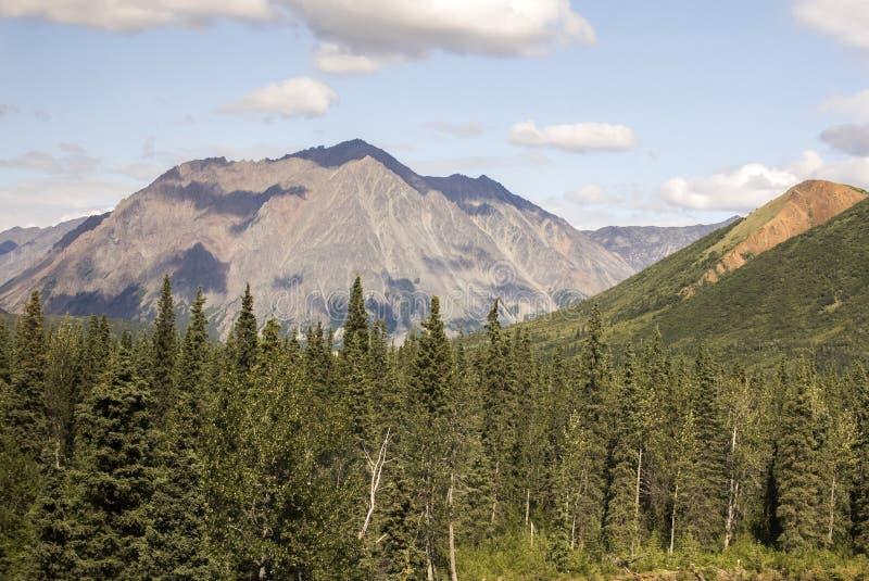 Szenisches Trainride durch Alaska-Wildnis lizenzfreies stockfoto