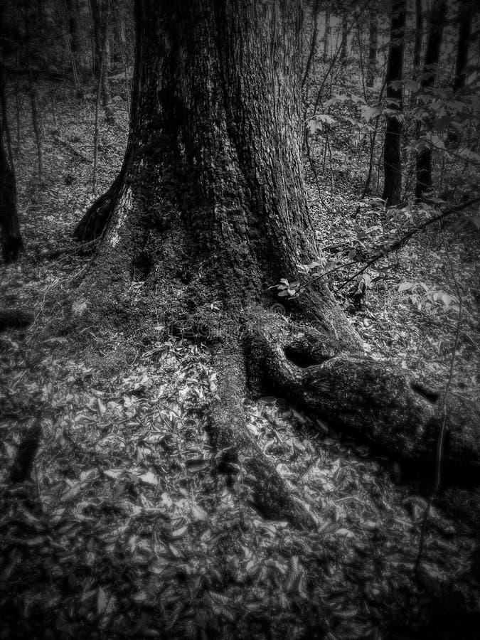 Szeptać drzewa obrazy royalty free