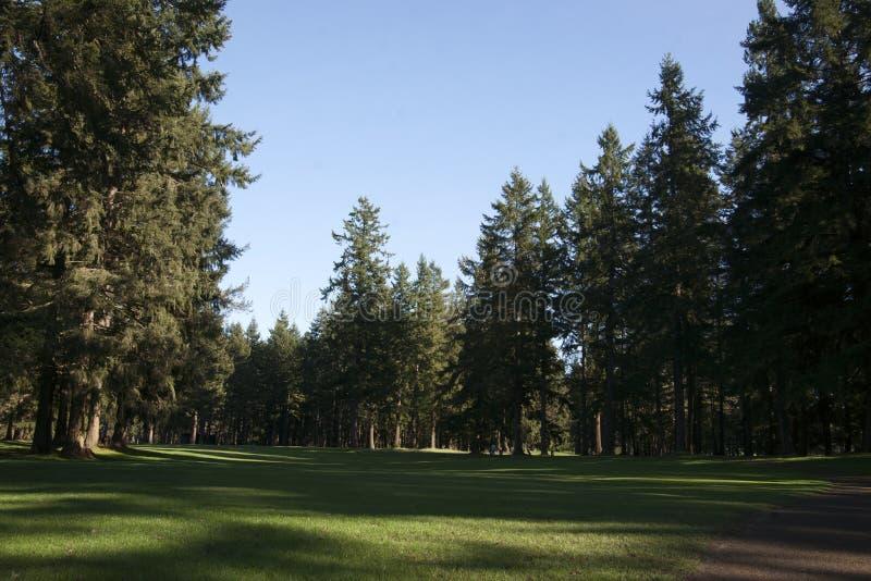 Szeptać jodły pole golfowe zdjęcie royalty free