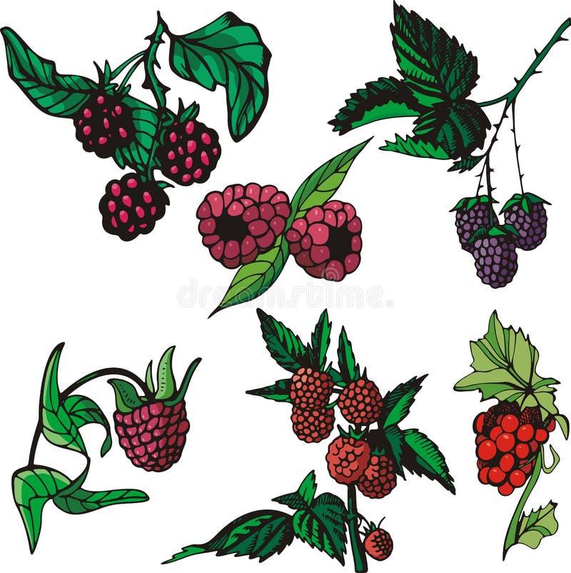 szereg ilustracyjne owocowe ilustracja wektor