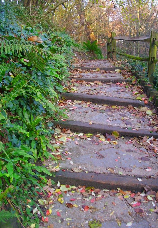 Szerocy kroki Przez Lesistego Parkland zdjęcia royalty free
