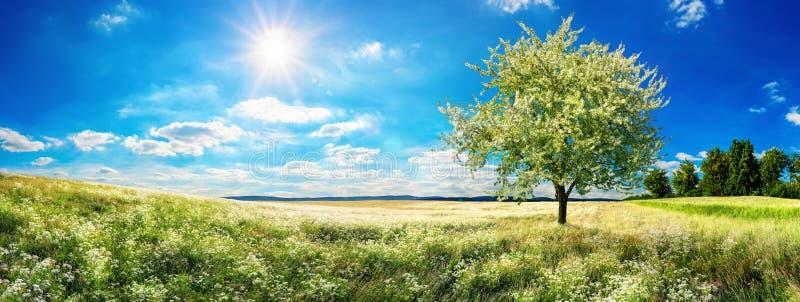 Szeroka łąka z kwitnąć drzewa w wiośnie zdjęcie royalty free