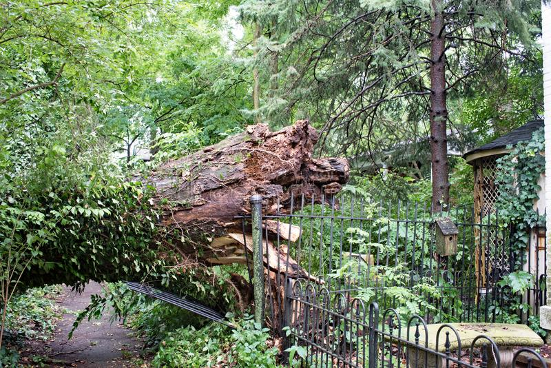 Szeroki drzewo Zestrzelający w burzy zdjęcie royalty free