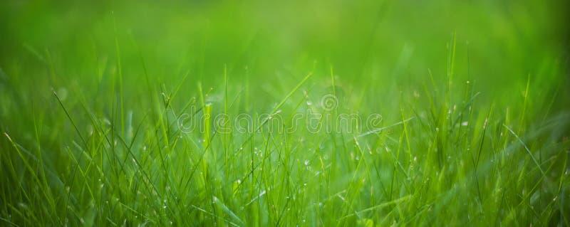 Szeroki kąt natury wiosny Zielonej trawy tło obraz royalty free